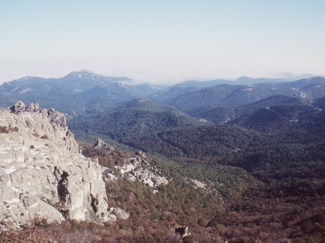 Dadia Lefkimi Forest